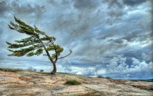 Khoảng cách xa nhất là giữa những cành cây mọc cùng một gốc nhưng không thể nương tựa vào nhau trước gió.